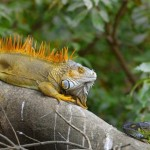 Costa Rica & Panama Canal Excursions