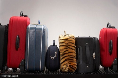 Unusual cruise luggage revealed